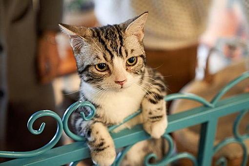 The psychological reason why Japanese people love cats so much!-ahr0chm6ly9zlmlzyw5vb2suy29tl3dvlzavdwqvmzmvmty3mjczl2mxlmpwzw%3D%3D.jpg