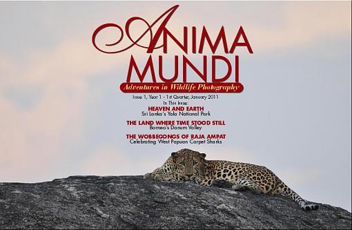 Anima Mundi-coveranimamundi1.jpg
