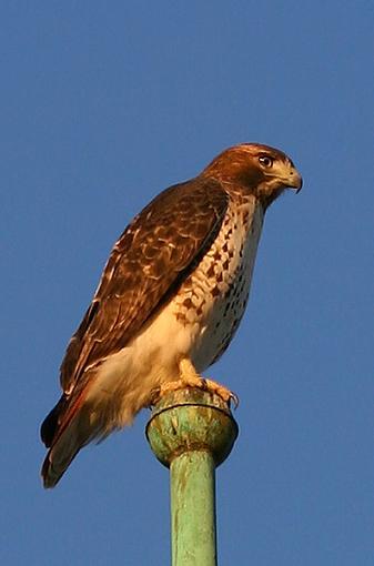 Lense recommendation-bird1-2538.jpg