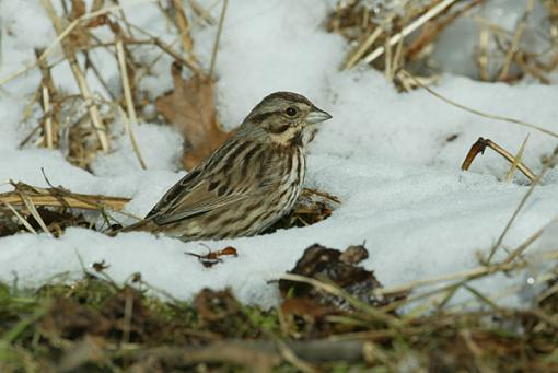 help with 1D color cast-swamp-sparrow1.jpg