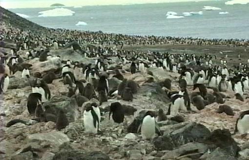 Discover Antarctica On Line (Video + Stills)-piverywide.jpg