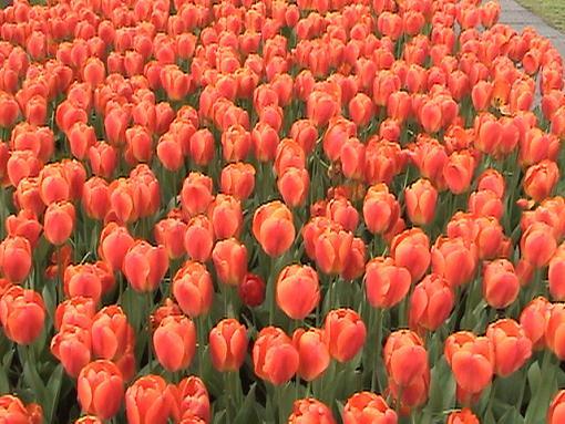 Travel To Belgium, Holland and Switzerland On Line (Video + Stills)-holfredfillscreen.jpg