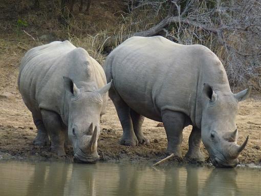 Experience South Africa, Take a Safari + Victoria Falls (Video and Stills)-125-medium-.jpg