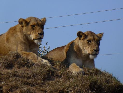 Experience South Africa, Take a Safari + Victoria Falls (Video and Stills)-116-medium-.jpg