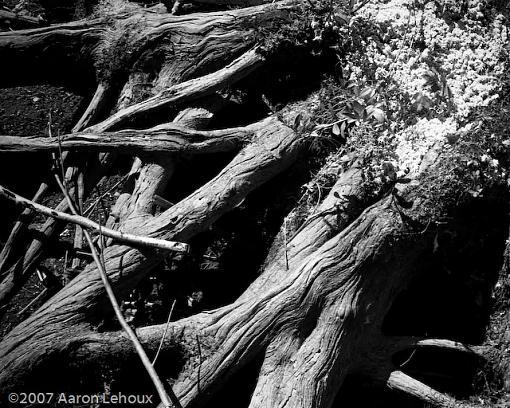 FINALLY, a decent scanner!-tree-trunk-2.jpg