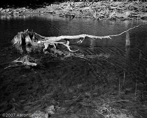 FINALLY, a decent scanner!-tree-trunk-submerged.jpg