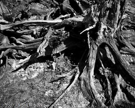 FINALLY, a decent scanner!-tree-trunk.jpg