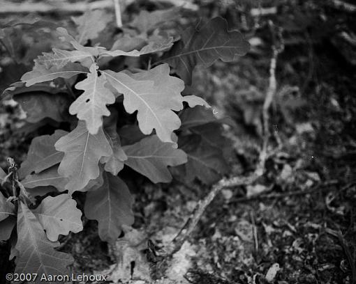 FINALLY, a decent scanner!-leafs.jpg