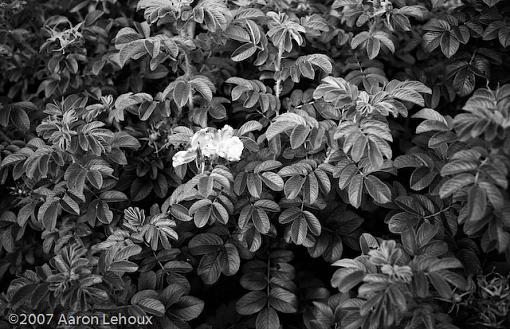 FINALLY, a decent scanner!-leafs-textures.jpg