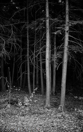 FINALLY, a decent scanner!-trees.jpg