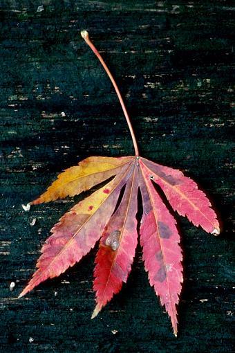 Show your Kodachrome!!-kodachrome-leaf.jpg