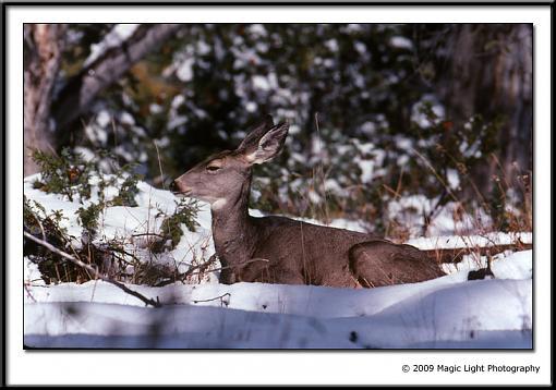 Show your Kodachrome!!-kodachrome_deer.jpg