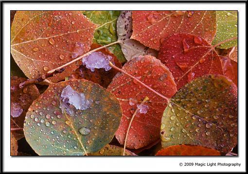 Show your Kodachrome!!-kodachrome_leaves.jpg