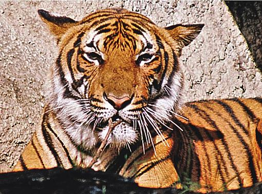 Back to the zoo ...-r1-11-2-copy.jpg