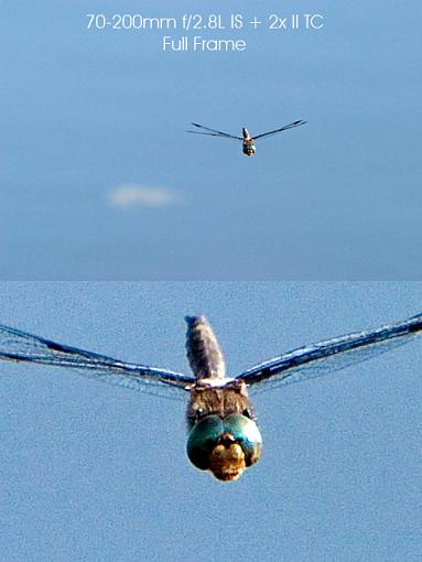 To IS or not to IS: Image Stabilization-70-200-2x-example-dragonfly-composite.jpg
