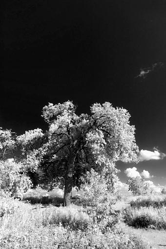 INFRARED LOOK through DSLR-crw_6303-ir.jpg
