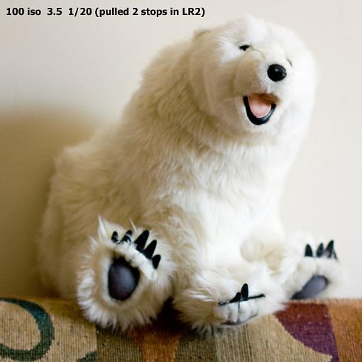 A low light photo tip-benny-bear-102.jpg