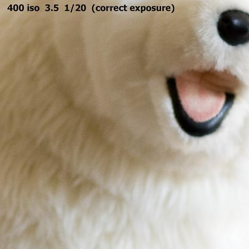 A low light photo tip-benny-bearcrop-100.jpg