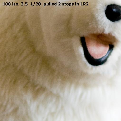A low light photo tip-benny-bearcrop-102.jpg