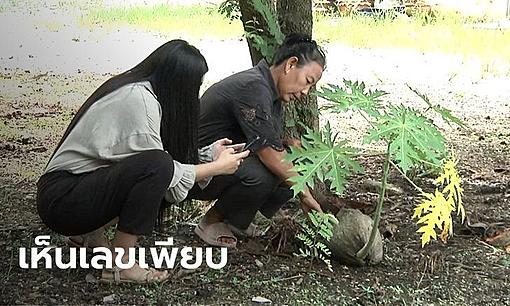 The papaya tree rose from the coconut. Villagers flock to ask for lucky numbers.-ahr0chm6ly9zlmlzyw5vb2suy29tl25zlzavdwqvmty1mi84mjyyotiyl2xvdhrvlmpwzw%3D%3D.jpg