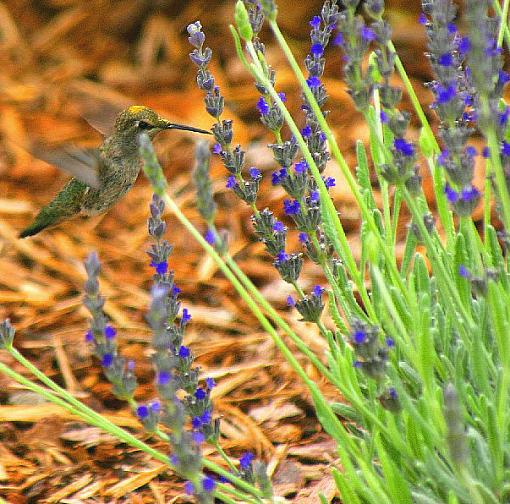 Are These Worthy?-yellow-spotted-hummer-iii.jpg