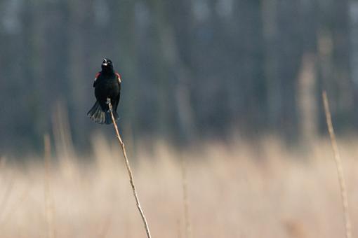 The 4 Basics-blackbird-background-1.jpg