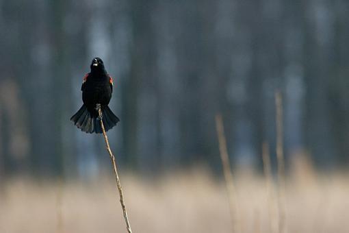 The 4 Basics-blackbird-background-3.jpg