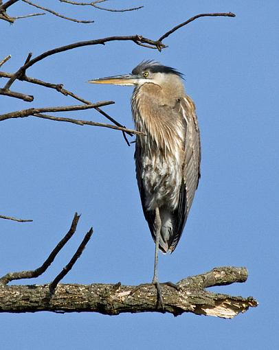 Another rough day at work...-loneheron_3.jpg
