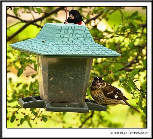 Table for Two-_mg_2466.jpg