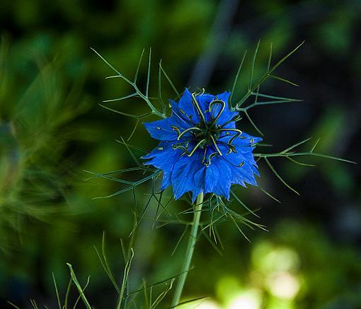 Purty Flower-800-x.jpg