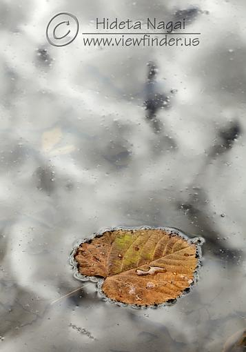 Autumn Leaves, Clouds, and Water-leaf-clouds.jpg