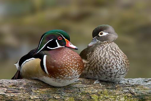 Vancouver Island Birds-2.jpg