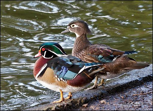 Vancouver Island Birds-3.jpg