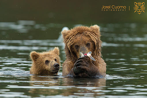 Happy Mothers Bear Day-bearsmall.jpg