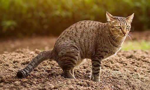 """Cat in the brain"" disease that cat slaves should be careful-ahr0chm6ly9zlmlzyw5vb2suy29tl2hllzavdwqvnc8ymzgzmy9jyxquanbn.jpg"
