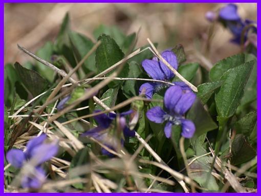 Macro Lense Question-macroflowers.jpg