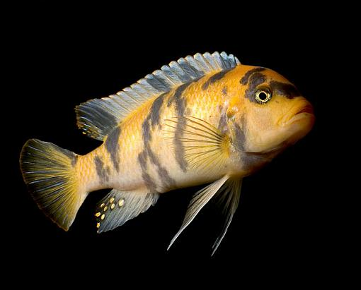 Fish Pictures-_2101383.jpg