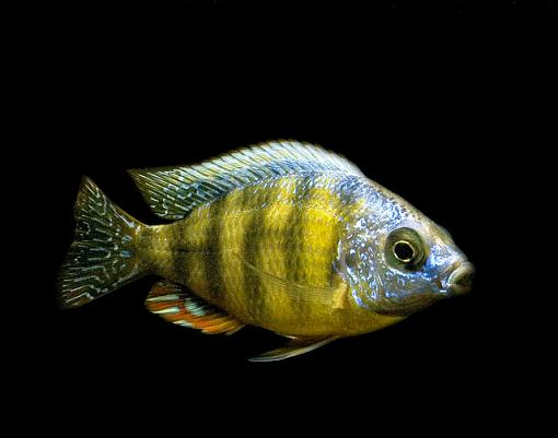 Fish Pictures-_3252012.jpg