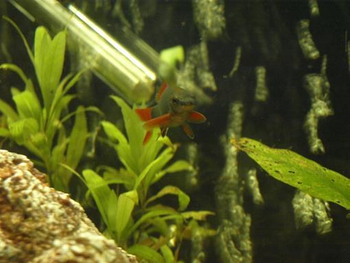 Fish Pictures-p7180329.jpg