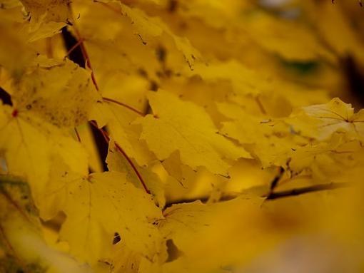 fall colors outside my office-13641_677356460217_15616651_38774122_6296201_n.jpg