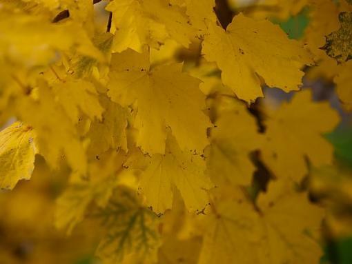 fall colors outside my office-13641_677356525087_15616651_38774126_1370848_n.jpg