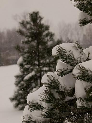 Snow Storm-pc192853.jpg
