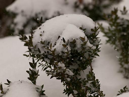 Snow Storm-pc192885.jpg
