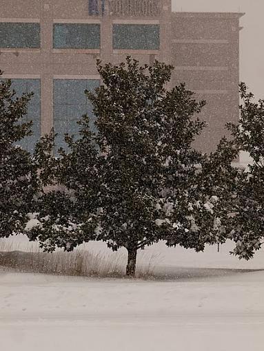 Snow Storm-pc192896.jpg