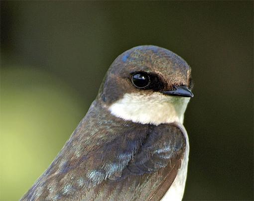 olympus 70-300-swallowb.jpg
