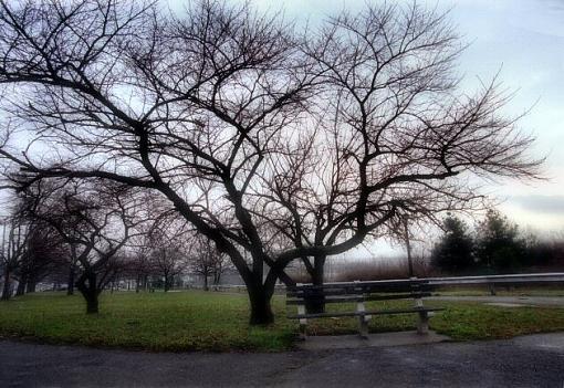 Bench under Tree  . . . . .    Keeper?-lndscp1203-1901xxweb.jpg