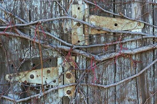 hindges-pix1a.jpg