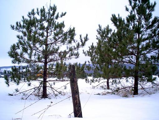 old fence in the snow-wire-trees.jpg