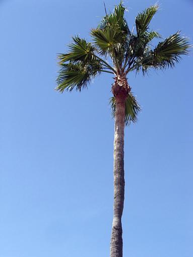 From California-dscf1569-resized.jpg