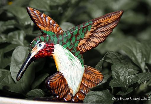 Hummingbird Close-Up-humming-bird-1.small.jpg